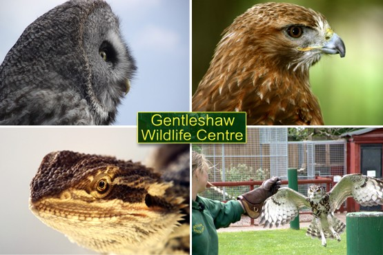 £6 instead of £14 for a family pass to Gentleshaw Wildlife Centre, Eccelshall – save a chirpy 57%