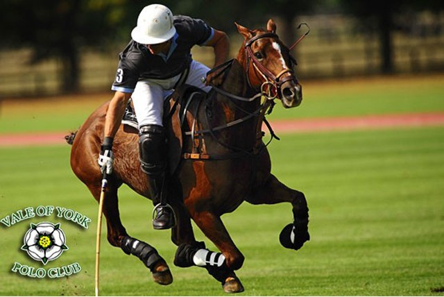 £25 instead of £80 (at The Vale of York Polo Club) for two 60 minute polo lessons suitable for riders of all abilities  – save 69%