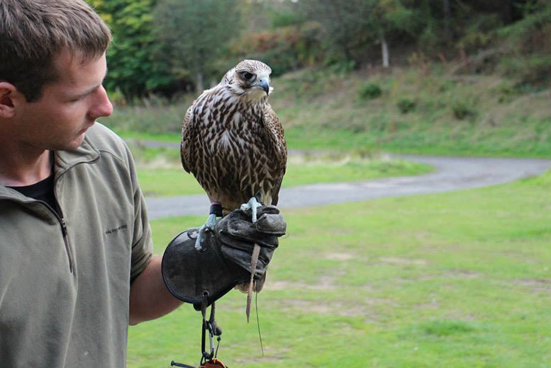 Bird of Prey Experience @ North East Falconry