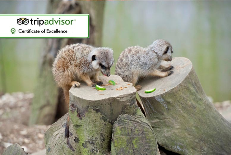 £15 instead of £30 for a meerkat experience for one person, £27 for two people at Bridlington Birds of Prey and Animal Park - save up to 50%