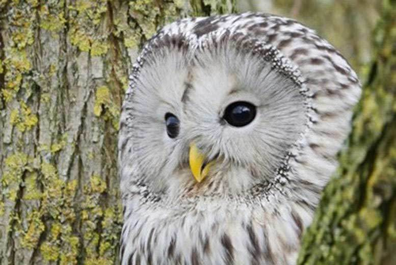 Activities: 90min Owl Experience for 1 or 2 @ Shropshire Falconry