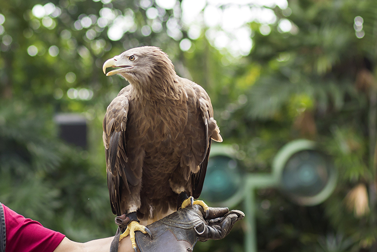 Activities: 2hr Falconry Experience for 1 or 2 @ Simon Tebbutt Falconry, Oakham