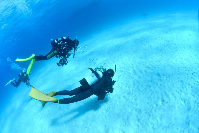 Activities: Scuba Diving Experience or PADI Open Water Course @ Aqua Pursuits