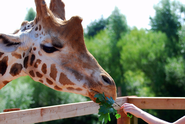 Activities: Giraffe Experience, Admission & Cuddly Toy @ Safari Zoo