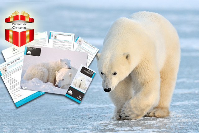 £9.99 instead of £19.99 (from Find Me A Gift) for a 1-year 'adopt a polar bear' pack - save 50%