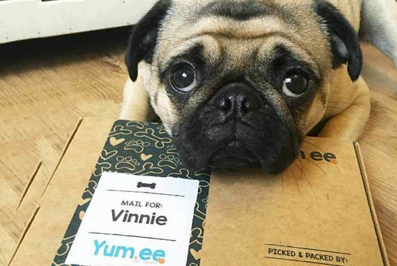 £4.95 instead of £9.90 for two personalised dog treat boxes from Yum.ee Pet Foods - save 50%