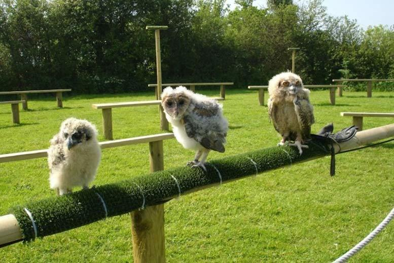 Activities: Full Day Birds of Prey Experience, Devon - 1 or 2 People!