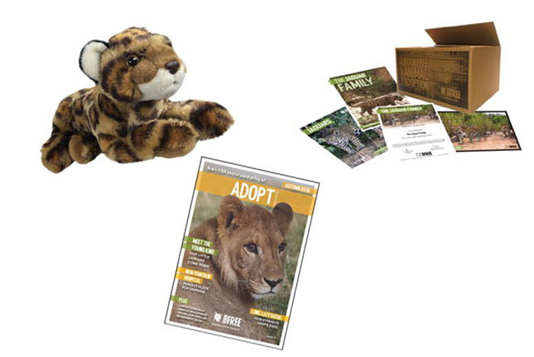 Activities: 1yr Born Free Jaguar Family Adoption Pack & Cuddly Toy