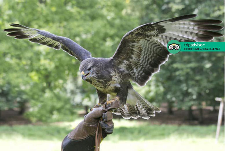 Activities: Owl & Hawk Experience for 1 or 2 @ Stockley Birds of Prey