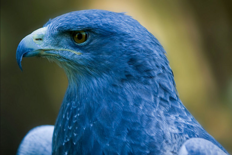 Activities: Little & Large Half-Day Birds of Prey Experience - For 1 or 2!