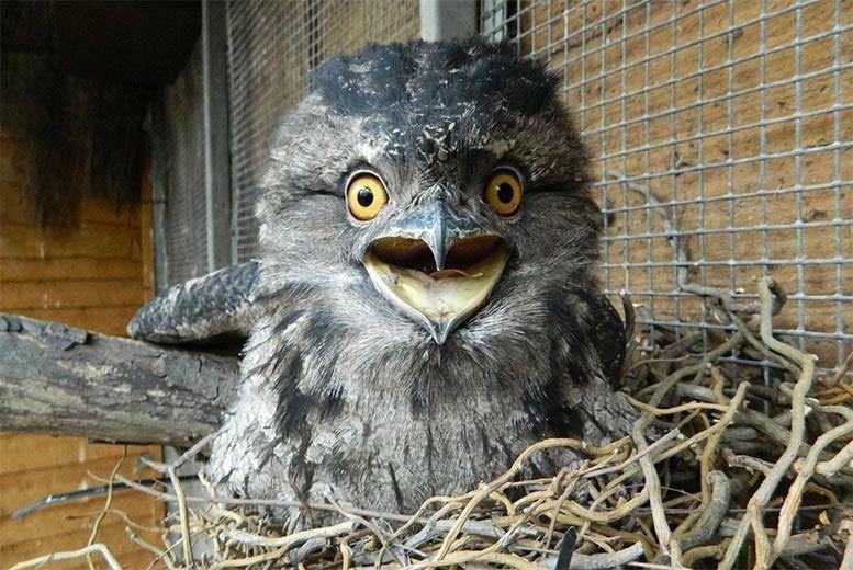 Activities: Twilight Owl Experience for 2 or 4 @ Kirkleatham Owl Centre