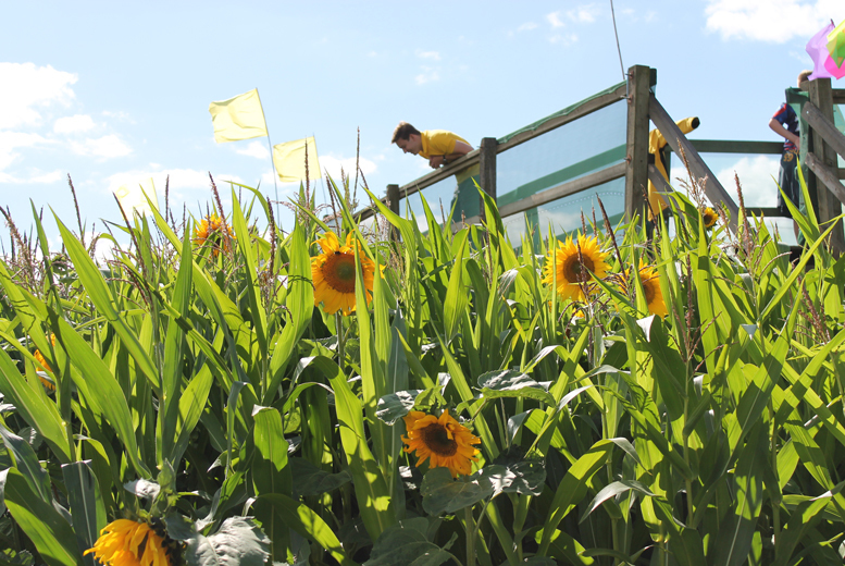 Activities: Cawthorne Maize Maze Entry, Barnsley - Family Option!