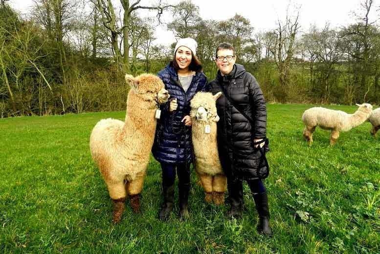 Activities: Charnwood Forest Alpaca Trekking & Sparkling Afternoon Tea for 2