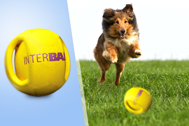 £9.99 instead of £19.99 (from Monster Pet Supplies) for an Interball Dog Ball Toy – save 50%