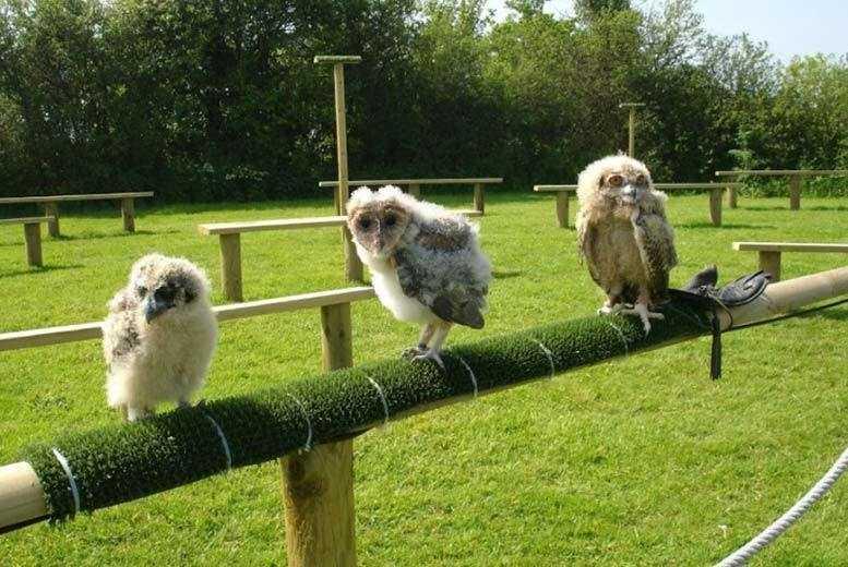 Activities: Full Day Birds of Prey Experience, Devon - 1 or 2 People!