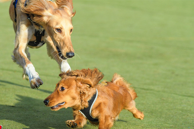 Restaurants & Bars: Dog Park Experience for 2 People & 1 Dog with Snacks & Puppuchino!