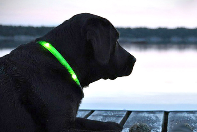 £4.99 instead of £19.99 (from 121 Mart) for an LED pet collar in a choice of sizes and colours - dress up your pet and save 75%