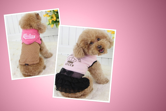 £9.99 instead of up to £19.99 (from Eden Petz) for a fashionable dog outfit - get a coat, top, dress or hoodie and save up to 50%