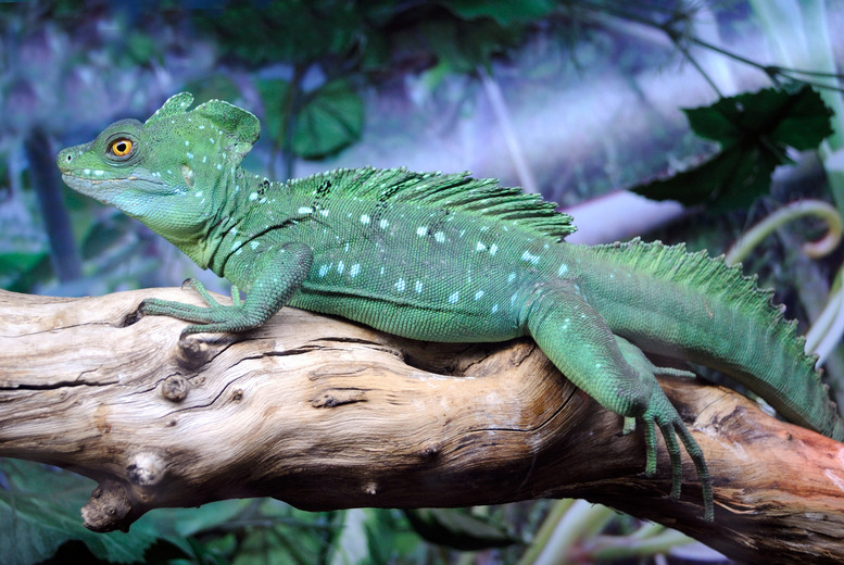 £24 instead of £50 for a reptile handling experience & adoption pack at Scales & Tales, Blackbrook Zoo - save 52%