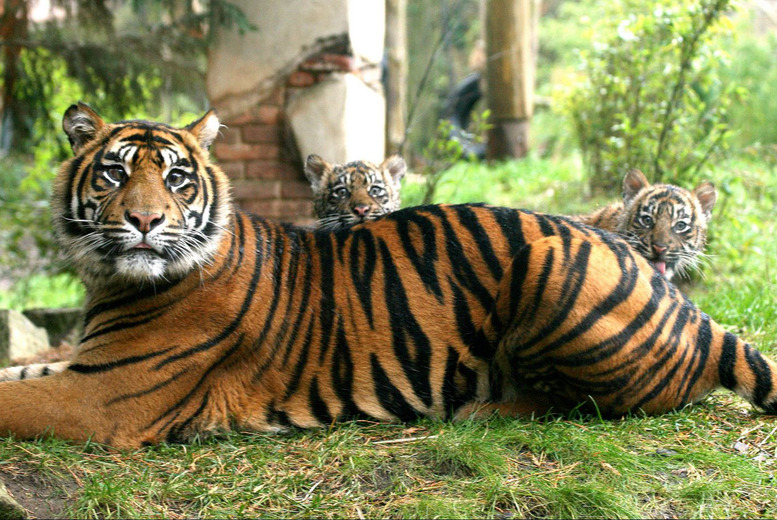 £125 instead of £250 for an animal encounter experience and theme park entry for 2 at Chessington World of Adventures - save 50%