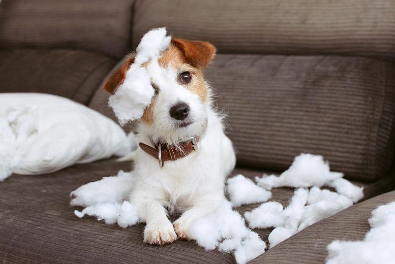 Image of Dog Socialisation & Obedience Course | Pet Care | UK | Living Social