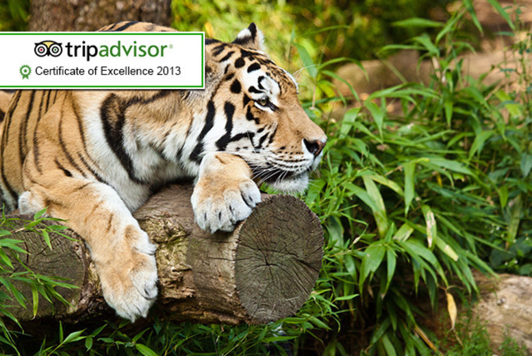 £6.50 instead of up to £13 for 1 child ticket, £8 for 1 adult ticket  to Paradise Wildlife Park, Broxbourne - save up to 50%