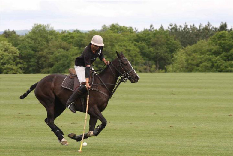 £19 instead of £55 for a 1-hour group polo lesson for one person, or £29 for a private lesson at Surrey Polo, Dunsfold - save up to 65%