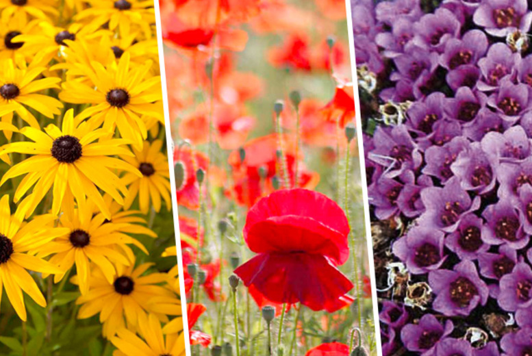£24.99 instead of up to £89.91 (from Dobies of Devon) for a surprise selection of 144 perennial plants in 9 different varieties - save up to 72%