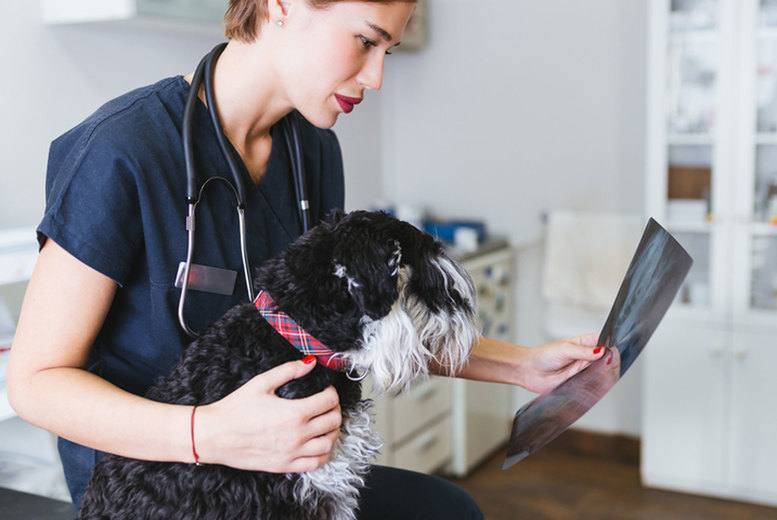 Image of Veterinary Support Assistant Course | UK | Living Social