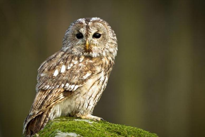 £18 for a half-day owl experience for one person inc. cake and hot drink, or £29 for two at the Birds of Prey Centre, Bedford - save up to 77%