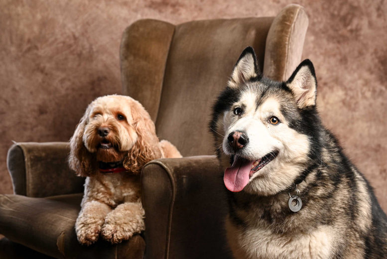 Image of Pet Photoshoot & Framed Print   Regional   Living Social