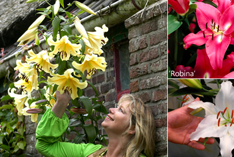 £8.99 instead of £14.99 (from You Garden) for 15 'skyscraper' lily plant bulbs featuring Belladonna, Robina and Cocossa varieties - save a sky-high 40%