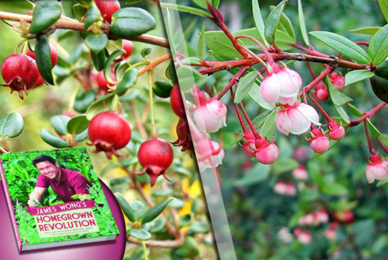 £8.99 instead of £19.99 (from Dobies of Devon) for three Chilean Guava plants and a copy of James Wong's Homegrown Revolution book - save 55%