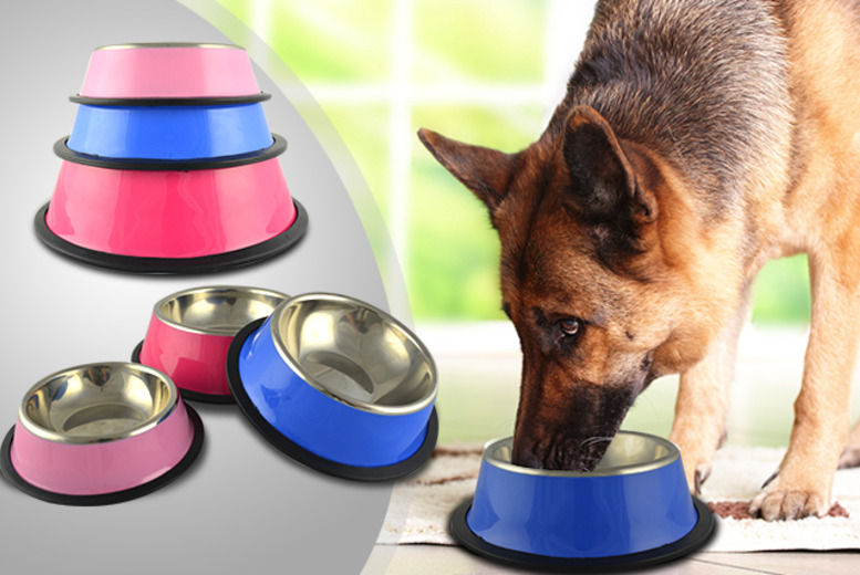 £5 instead of £19.99 (from Web 18) for a small stainless steel dog bowl, £7 for a medium or £9 for a large - save up to 75%
