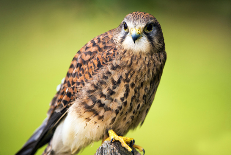 £6 for entry for two adults to York Bird of Prey Center, £9 for two adults and two kids or £10 for 2 adults and 3 kids - save up to 54%