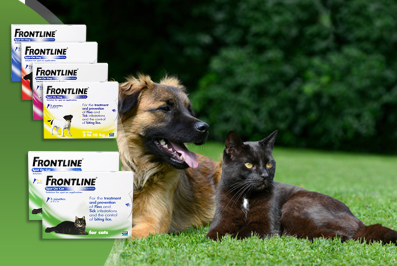 £11.99 (from Monster Pet Supplies) for a 3-pack of Frontline® flea drops for cats, from £14.99 for dogs - save up to 38%