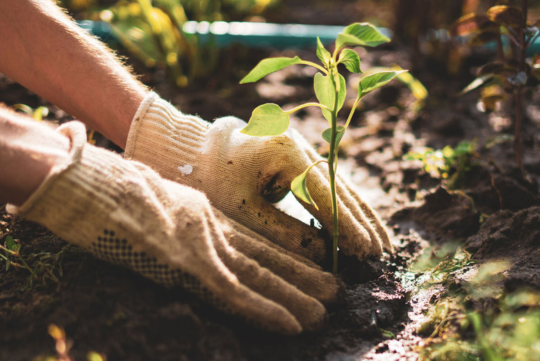 Image of Horticulture Level 3 Diploma Course | UK | Living Social