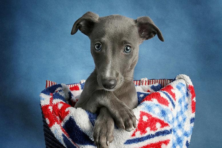 Image of Pet Photoshoot & 4 Prints | 8in | Regional | Living Social