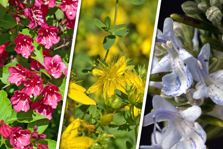 £17.99 instead of £38.99 (from You Garden) for 10-plant hardy shrub collection - save 54%