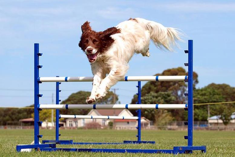 £8 for a child ticket, £12 for an adult ticket or £30 for a family ticket to The Pet Show 2014, Stoneleigh Park - save up to 19%