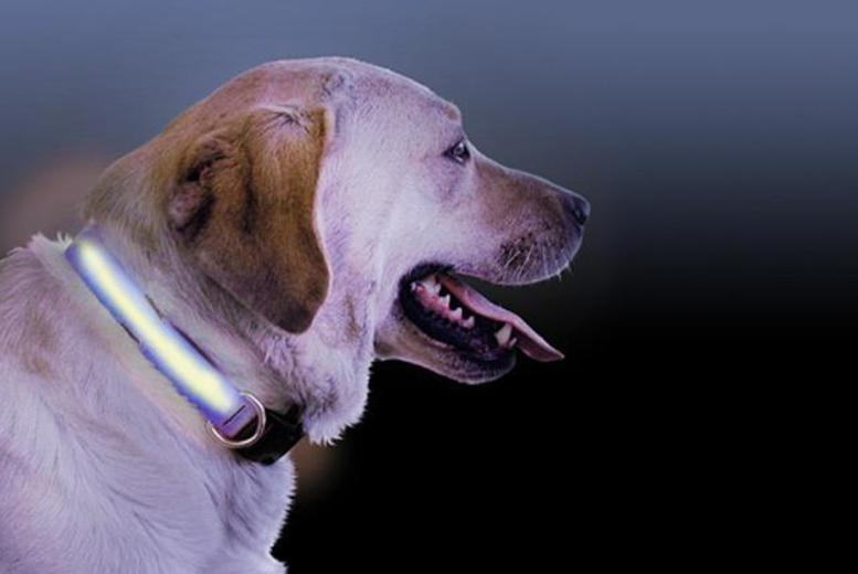 £4.99 instead of £19.99 (from 121 Mart) for an LED pet collar in a choice of sizes and colours - save 75%