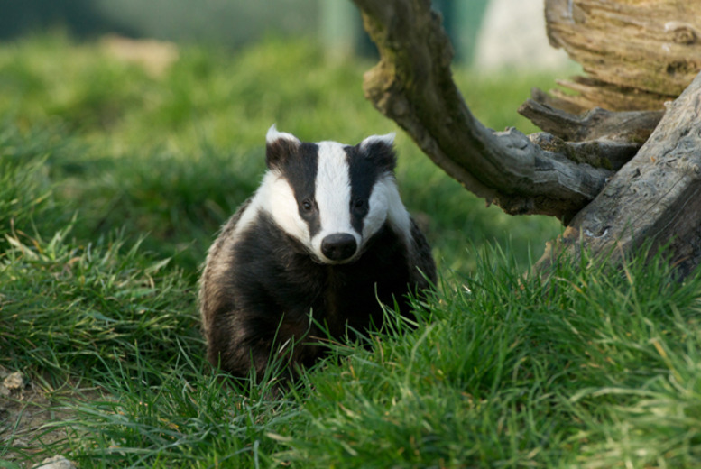£5 instead of up to £11 for one ticket, or £15 for a family ticket (2 adults, 2 children) to the British Wildlife Centre, Lingfield - save up to 55%
