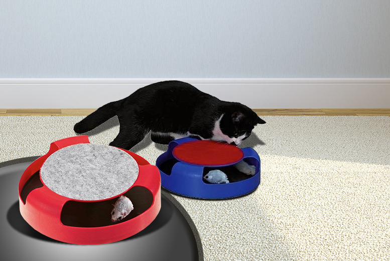 £7.99 instead of £29.99 (from London Exchainstore) for a 'Catch the Mouse' cat toy - get your claws stuck in and save 73%