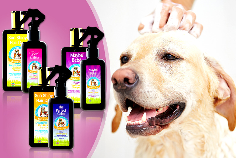 £9.99 instead of £22 (from Butch & Bess) for doggy shampoo and grooming spray bundle – treat your pooch and save 55%