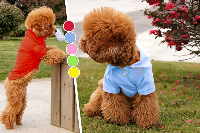 £5.99 instead of £29.99 (from Gizmo Gadgets) for a doggy polo shirt, £9.99 for 2 or £13.99 for 3 - save up to 80%