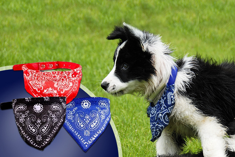 £4.99 instead of £24.99 (from Gizmo Gadgets) for a dog bandana collar in a choice of colours, £8.99 for 2 - save up to 80%