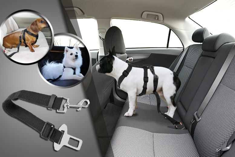 £9.99 (from The Treasure Chest) for a small dog seat belt and harness, £11.99 for a medium or £12.99 for a large - save up to 67%
