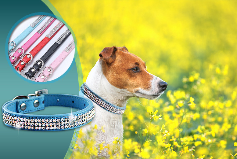 £5.99 (from Gizmo Gadgets) for a faux leather diamante pet collar in a choice of 4 colours, or £9.99 for a collar and lead - save up to 83%