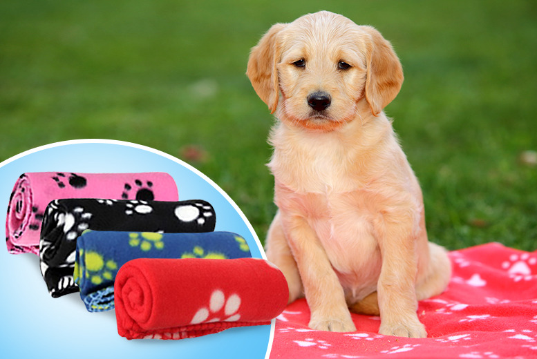 £6.99 instead of £34.99 (from Gizmo Gadgets) for a pet blanket in a choice of colours, £12.99 for 2 blankets – save up to 80%