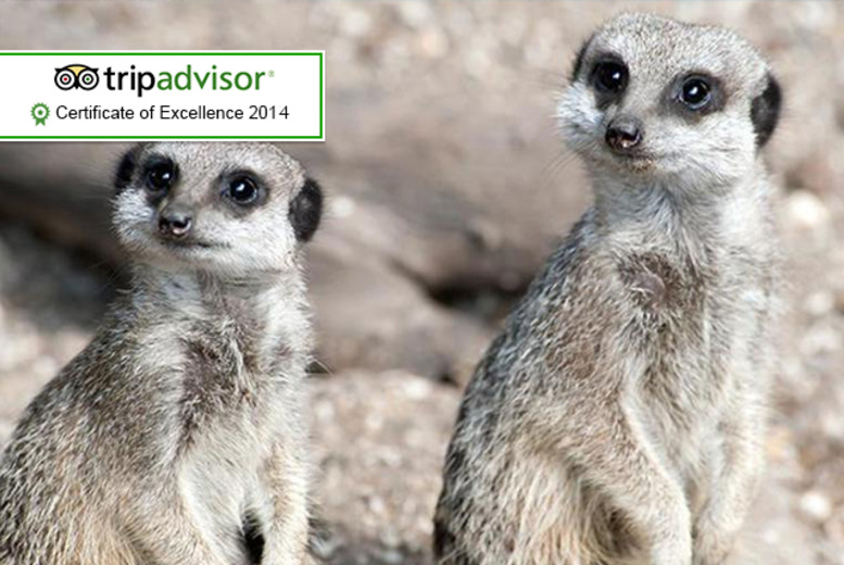 £19 instead of £50 for a 3-hour park keeper experience, £36 for 2 people, £64 for 4 people at Bridlington Animal Park - save up to 62%
